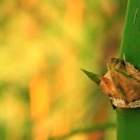 uravu_bamboo_banner-image-01