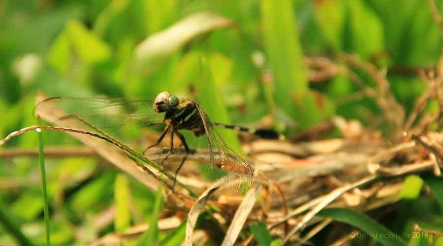 uravu_bamboo_biodiversity_02