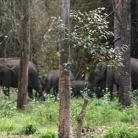uravu_bamboo_biodiversity_03