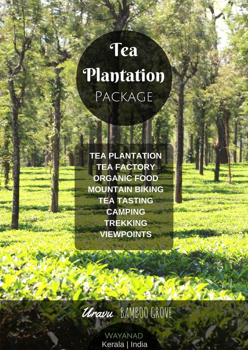tea plantations in wayanad