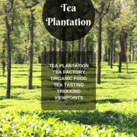 Uravu Bamboo Grove – Tea plantation activity flyer