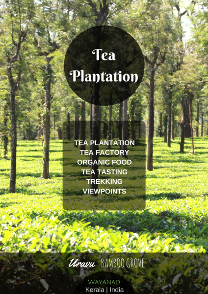 Tea plantations package