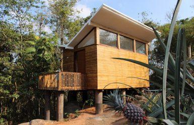 Uravu_Bamboo_Grove_Style_in_the_Wild_1