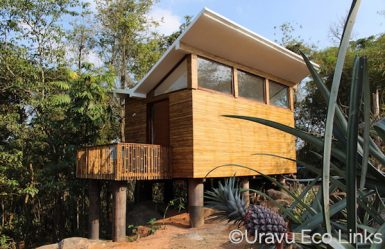 Uravu_Bamboo_Grove_Style_in_the_Wild_1 copie copie